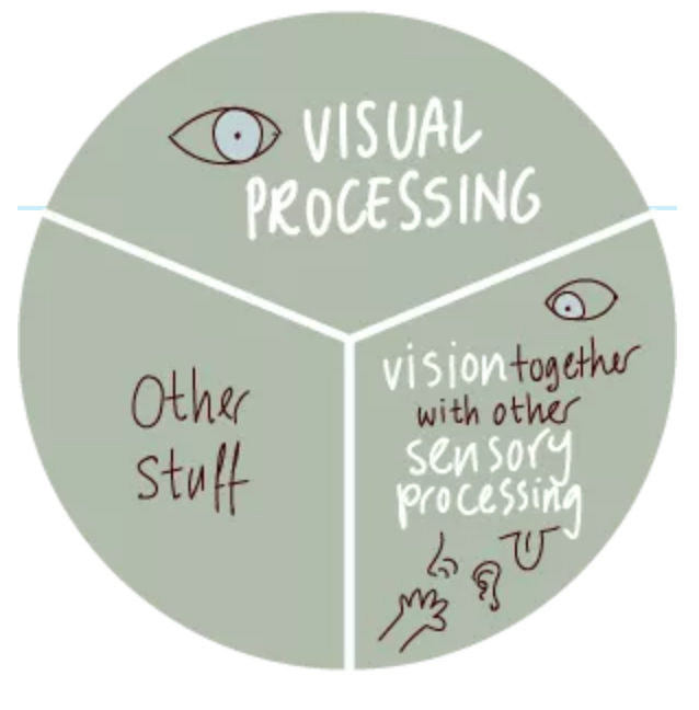 a pie graph showing one third for visual processing, one third for visual and other senses, and one third for other stuff